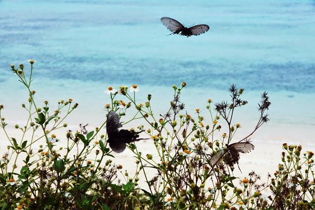 batfly