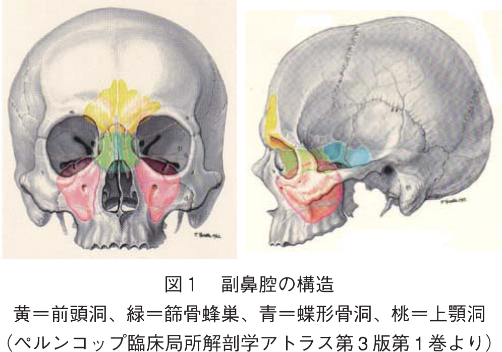喉の痛み一瞬で治す・共鳴誘導